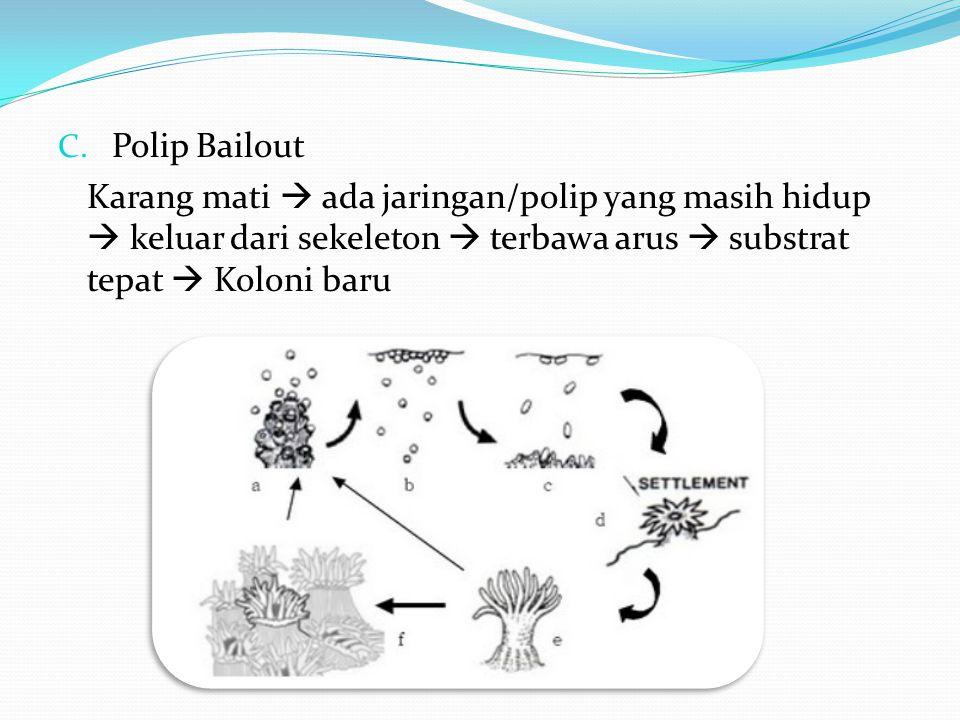 C. Polip Bailout Karang mati  ada jaringan/polip yang masih hidup  keluar dari sekeleton  terbawa arus  substrat tepat  Koloni baru