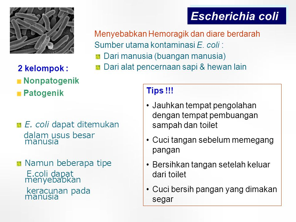 19 Escherichia coli Menyebabkan Hemoragik dan diare berdarah Sumber utama kontaminasi E. coli : Dari manusia (buangan manusia) Dari alat pencernaan sa