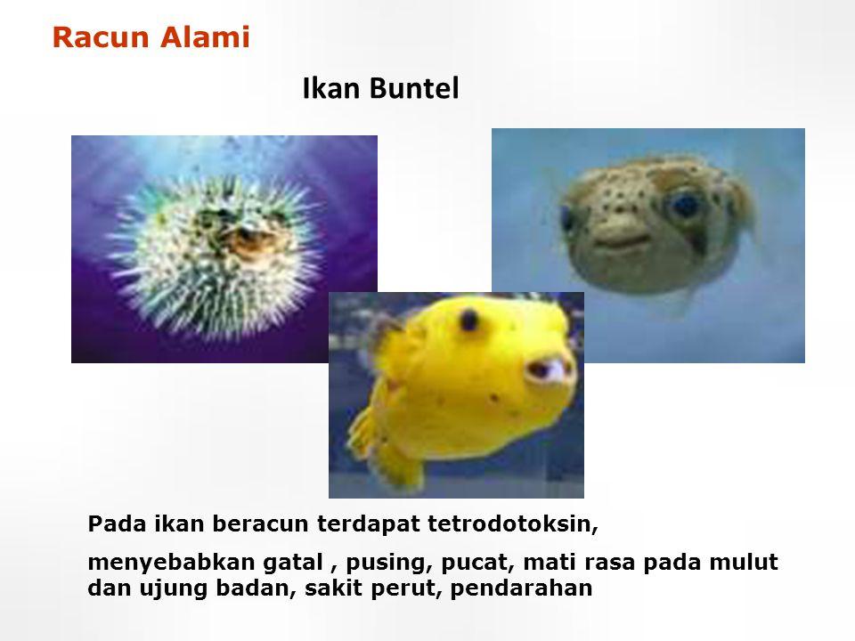 Ikan Buntel Pada ikan beracun terdapat tetrodotoksin, menyebabkan gatal, pusing, pucat, mati rasa pada mulut dan ujung badan, sakit perut, pendarahan