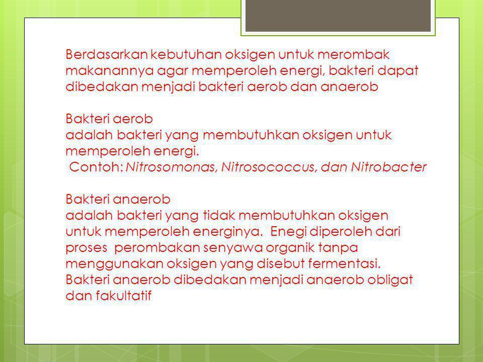 Berdasarkan kebutuhan oksigen untuk merombak makanannya agar memperoleh energi, bakteri dapat dibedakan menjadi bakteri aerob dan anaerob Bakteri aero