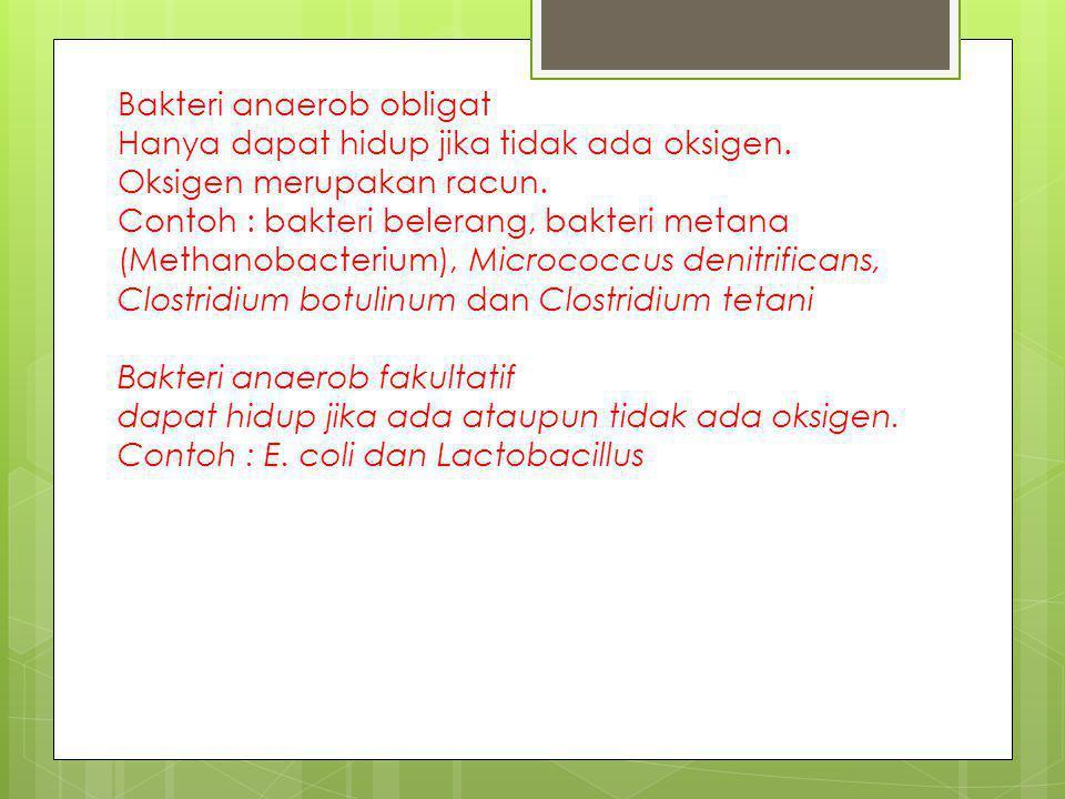Bakteri anaerob obligat Hanya dapat hidup jika tidak ada oksigen. Oksigen merupakan racun. Contoh : bakteri belerang, bakteri metana (Methanobacterium