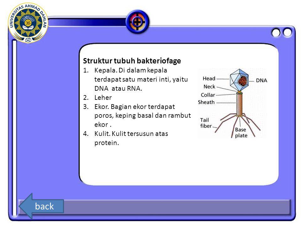 6.Bakteriofag, virus yang hidup di dalam sel bakteri Esherichia coli, mempunyai...