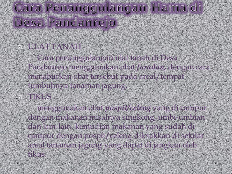  ULAT TANAH Cara penanggulangan ulat tanah di Desa Pandanrejo menggunakan obat furadan, dengan cara menaburkan obat tersebut pada areal/tempat tumbuh