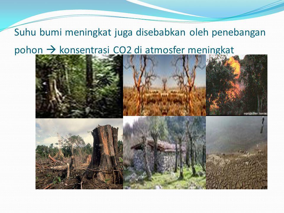 Suhu bumi meningkat juga disebabkan oleh penebangan pohon  konsentrasi CO2 di atmosfer meningkat