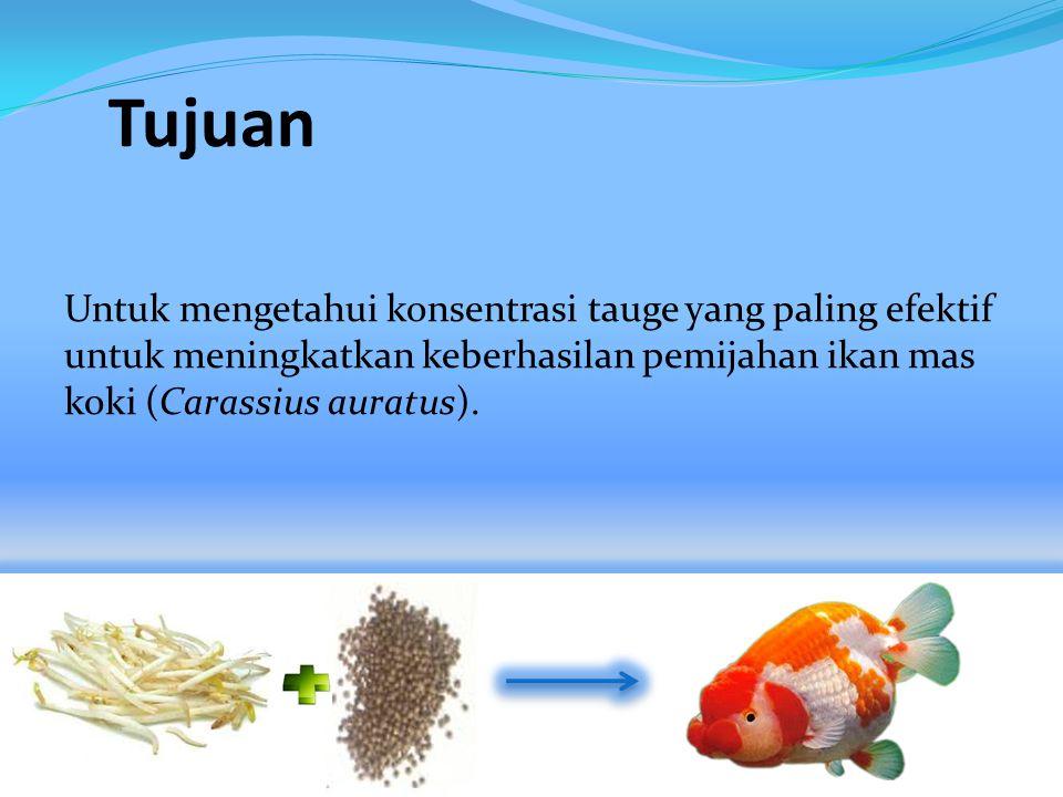 Tujuan Untuk mengetahui konsentrasi tauge yang paling efektif untuk meningkatkan keberhasilan pemijahan ikan mas koki (Carassius auratus).