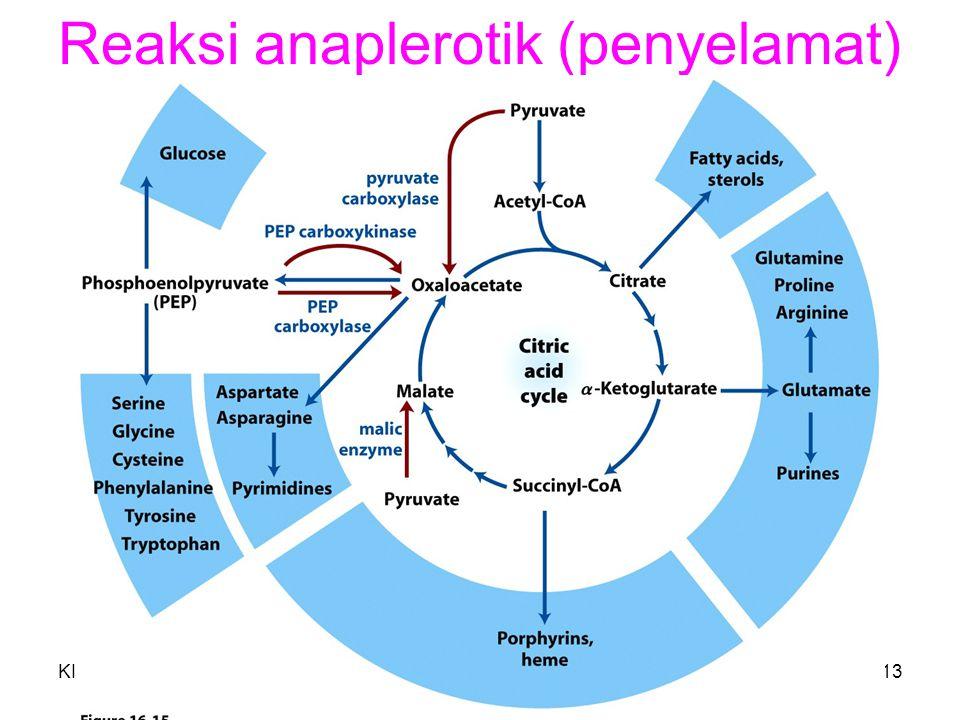 KI3061Zeily Nurachman13 Reaksi anaplerotik (penyelamat)