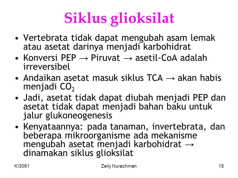 KI3061Zeily Nurachman15 Siklus glioksilat •Vertebrata tidak dapat mengubah asam lemak atau asetat darinya menjadi karbohidrat •Konversi PEP → Piruvat → asetil-CoA adalah irreversibel •Andaikan asetat masuk siklus TCA → akan habis menjadi CO 2 •Jadi, asetat tidak dapat diubah menjadi PEP dan asetat tidak dapat menjadi bahan baku untuk jalur glukoneogenesis •Kenyataannya: pada tanaman, invertebrata, dan beberapa mikroorganisme ada mekanisme mengubah asetat menjadi karbohidrat → dinamakan siklus glioksilat