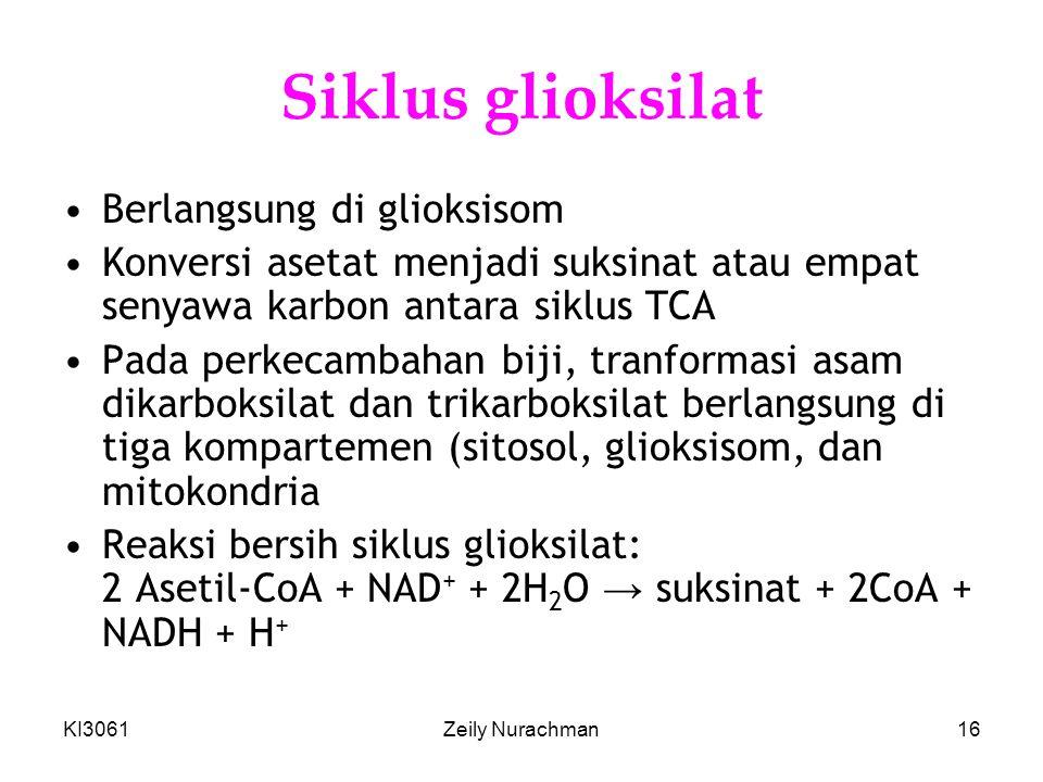 KI3061Zeily Nurachman16 Siklus glioksilat •Berlangsung di glioksisom •Konversi asetat menjadi suksinat atau empat senyawa karbon antara siklus TCA •Pa