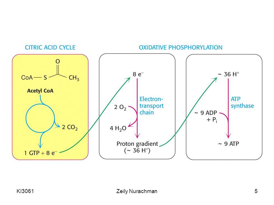 KI3061Zeily Nurachman16 Siklus glioksilat •Berlangsung di glioksisom •Konversi asetat menjadi suksinat atau empat senyawa karbon antara siklus TCA •Pada perkecambahan biji, tranformasi asam dikarboksilat dan trikarboksilat berlangsung di tiga kompartemen (sitosol, glioksisom, dan mitokondria •Reaksi bersih siklus glioksilat: 2 Asetil-CoA + NAD + + 2H 2 O → suksinat + 2CoA + NADH + H +