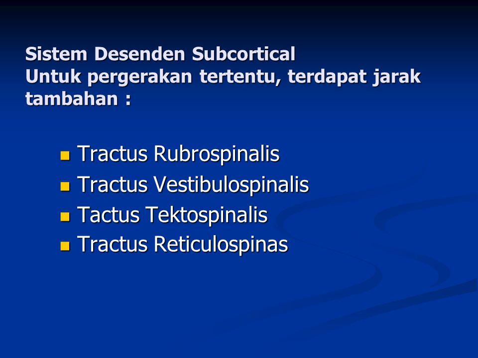 Sistem Desenden Subcortical Untuk pergerakan tertentu, terdapat jarak tambahan :  Tractus Rubrospinalis  Tractus Vestibulospinalis  Tactus Tektospi