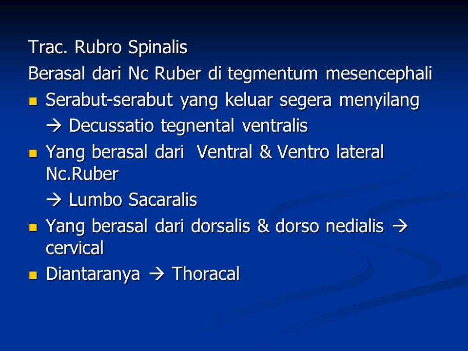 Trac. Rubro Spinalis Berasal dari Nc Ruber di tegmentum mesencephali  Serabut-serabut yang keluar segera menyilang  Decussatio tegnental ventralis 
