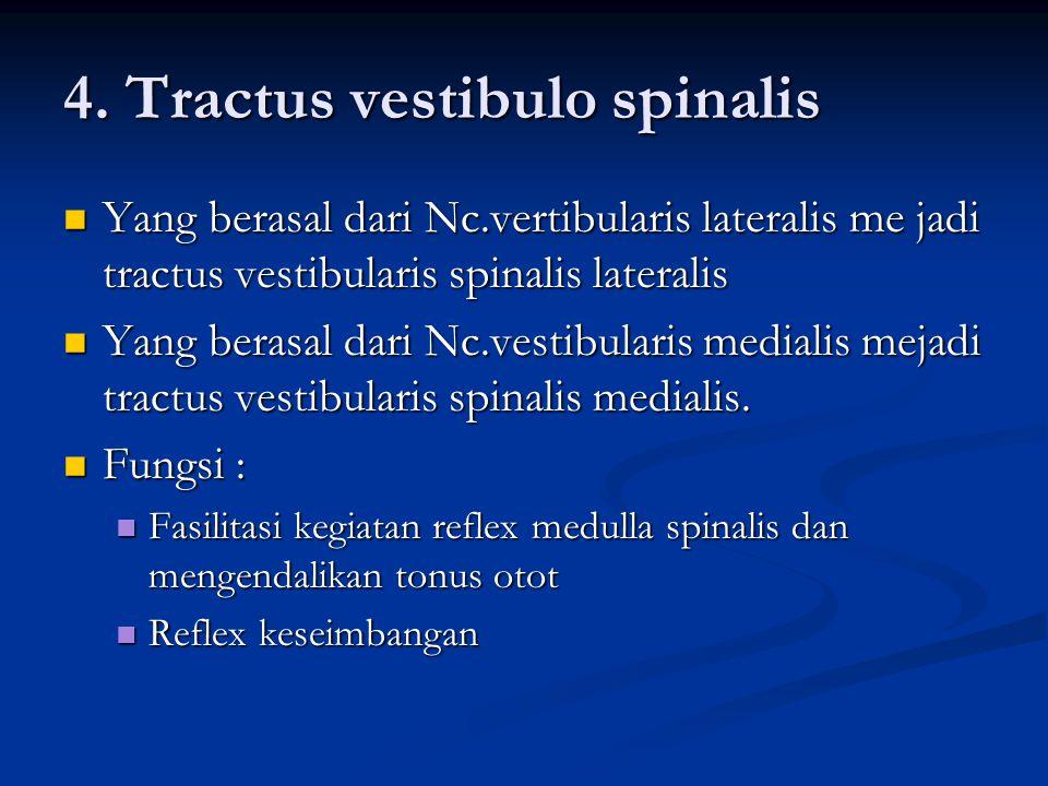4. Tractus vestibulo spinalis  Yang berasal dari Nc.vertibularis lateralis me jadi tractus vestibularis spinalis lateralis  Yang berasal dari Nc.ves