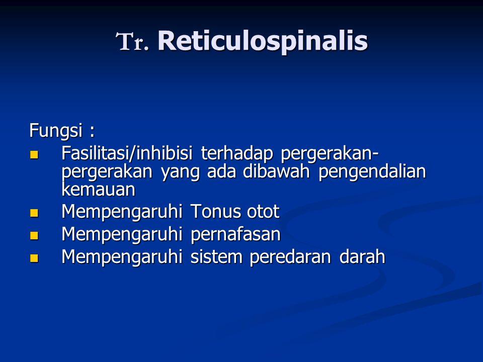 Tr. Reticulospinalis Fungsi :  Fasilitasi/inhibisi terhadap pergerakan- pergerakan yang ada dibawah pengendalian kemauan  Mempengaruhi Tonus otot 