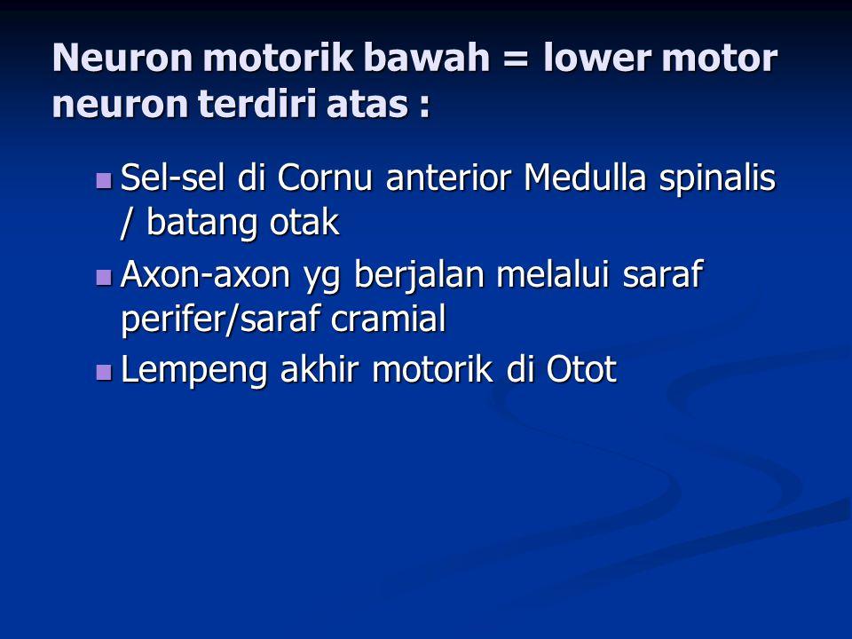 Neuron motorik bawah = lower motor neuron terdiri atas :  Sel-sel di Cornu anterior Medulla spinalis / batang otak  Axon-axon yg berjalan melalui sa