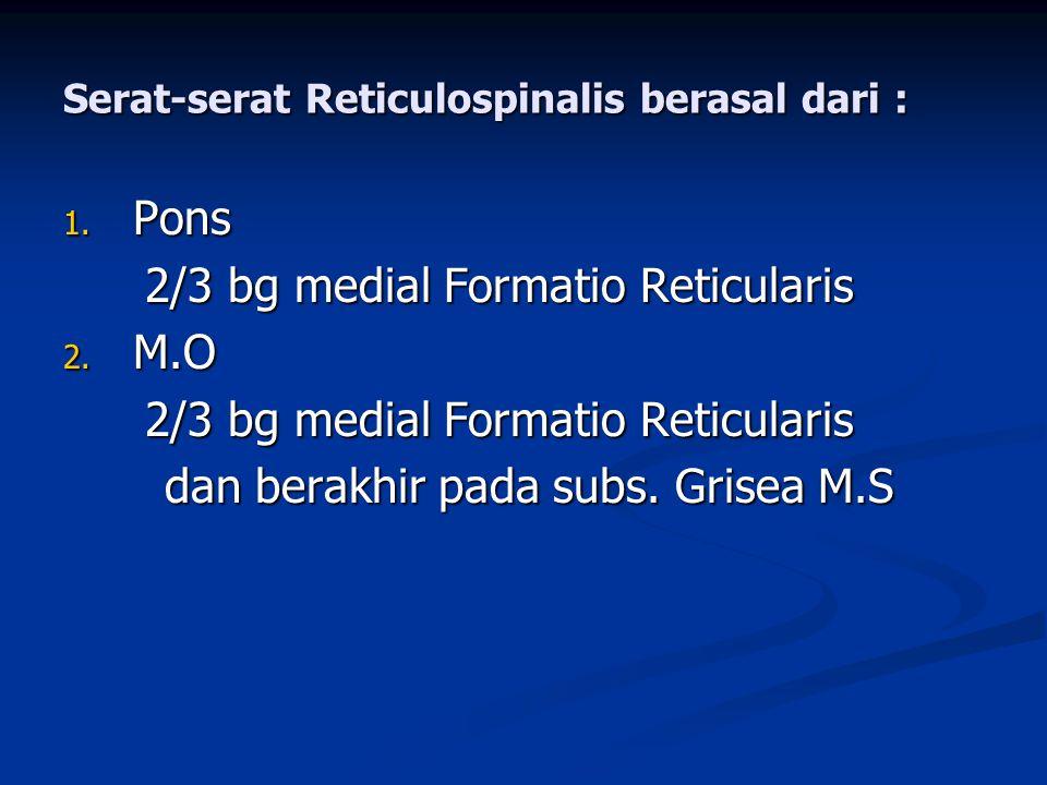 Serat-serat Reticulospinalis berasal dari : 1. Pons 2/3 bg medial Formatio Reticularis 2/3 bg medial Formatio Reticularis 2. M.O 2/3 bg medial Formati