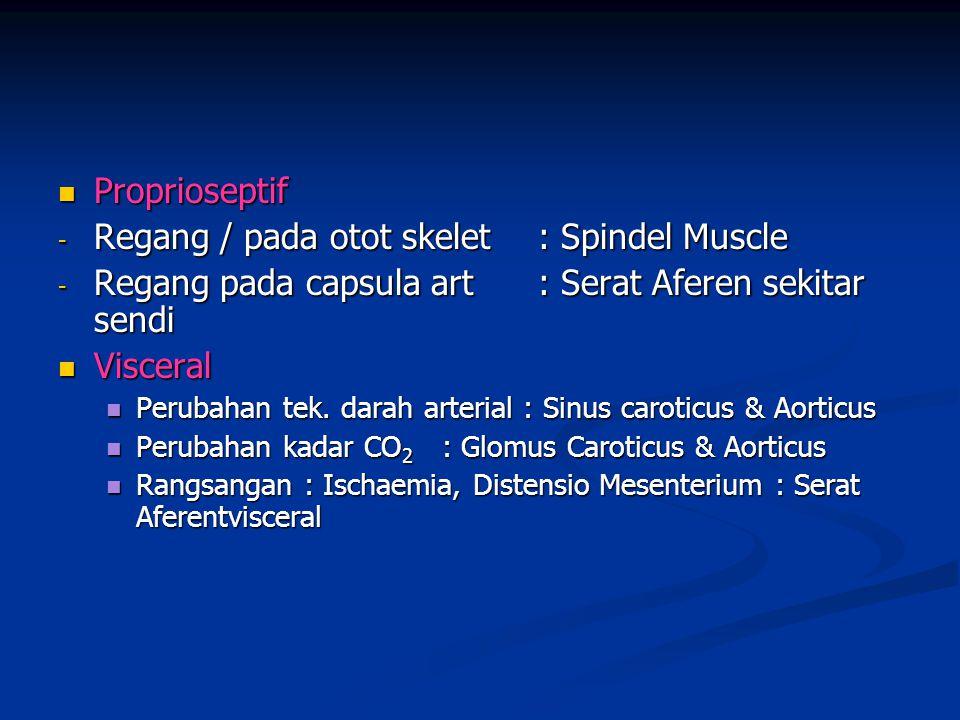  Proprioseptif - Regang / pada otot skelet: Spindel Muscle - Regang pada capsula art: Serat Aferen sekitar sendi  Visceral  Perubahan tek. darah ar