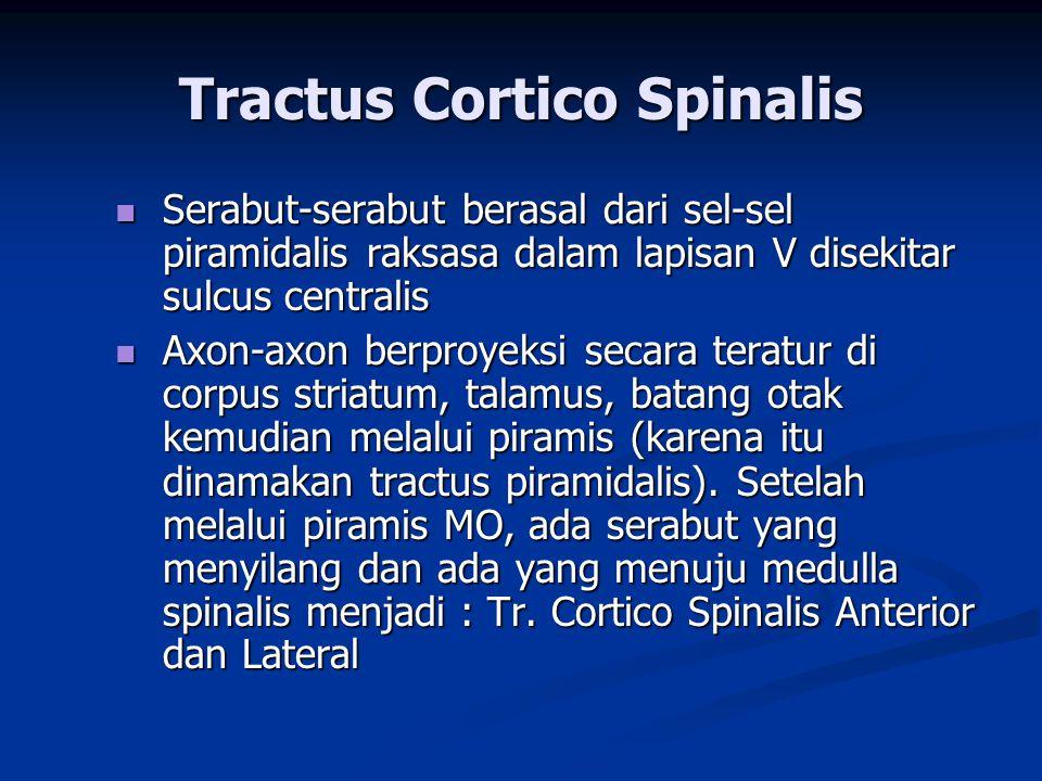 Tractus Cortico Spinalis Anterior  Berakhir pada segmen Thoracal  Melayani otot-otot Truncus Tractus Cortico Spinalis Lateralis  55 % berakhir pada Cervical  20 % berakhir pada Thoracal  25 % berakhir pada Lumbosacral Terutama melayani extrenitas superior  Fungsi : mengendalikan kegiatan Neuron motorik didalam Cornu Ventralis Jadi : menghantarkan impuls-impuls motorik yang berhubungan dgn pergerakan yang ada dibawah pengendalian,  keterampilan Jadi : menghantarkan impuls-impuls motorik yang berhubungan dgn pergerakan yang ada dibawah pengendalian,  keterampilan