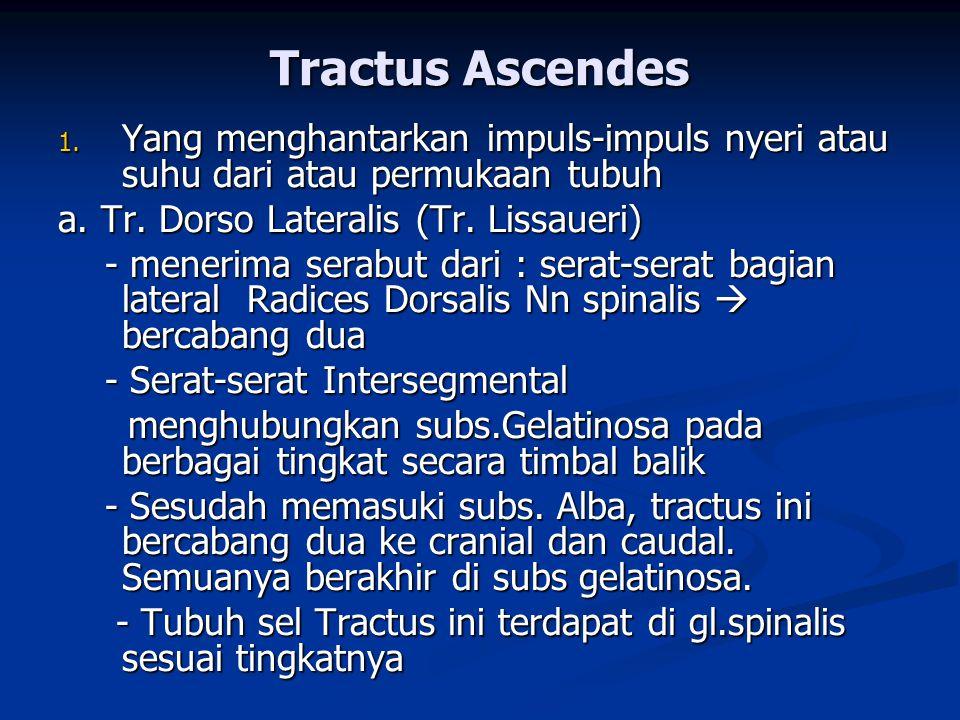 1. Yang menghantarkan impuls-impuls nyeri atau suhu dari atau permukaan tubuh a. Tr. Dorso Lateralis (Tr. Lissaueri) - menerima serabut dari : serat-s