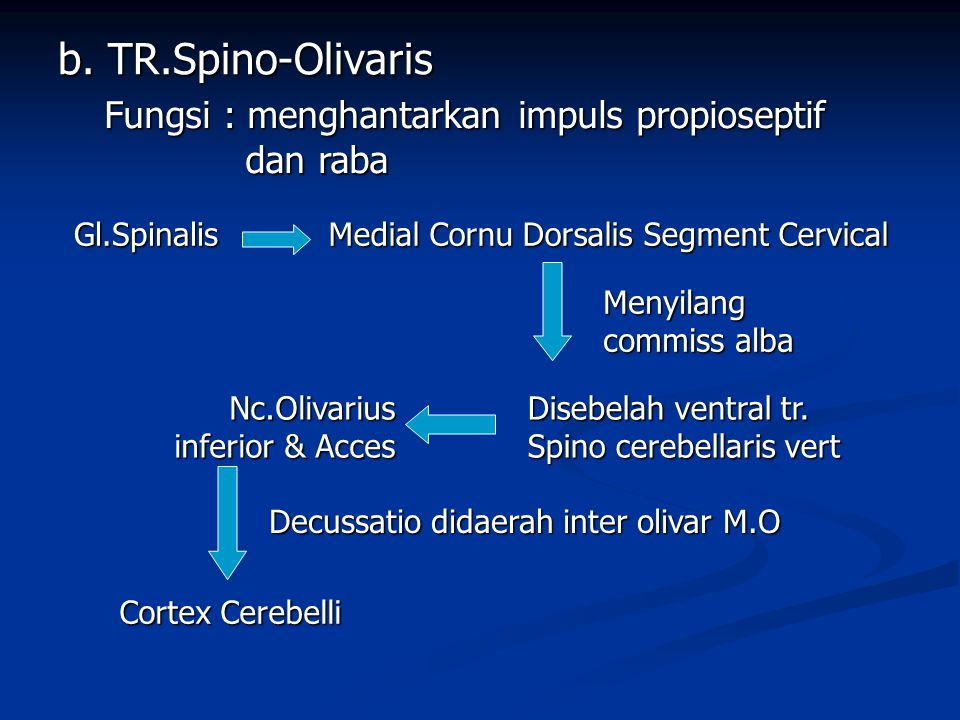 b. TR.Spino-Olivaris Fungsi : menghantarkan impuls propioseptif dan raba Gl.Spinalis Medial Cornu Dorsalis Segment Cervical Menyilang commiss alba Dis