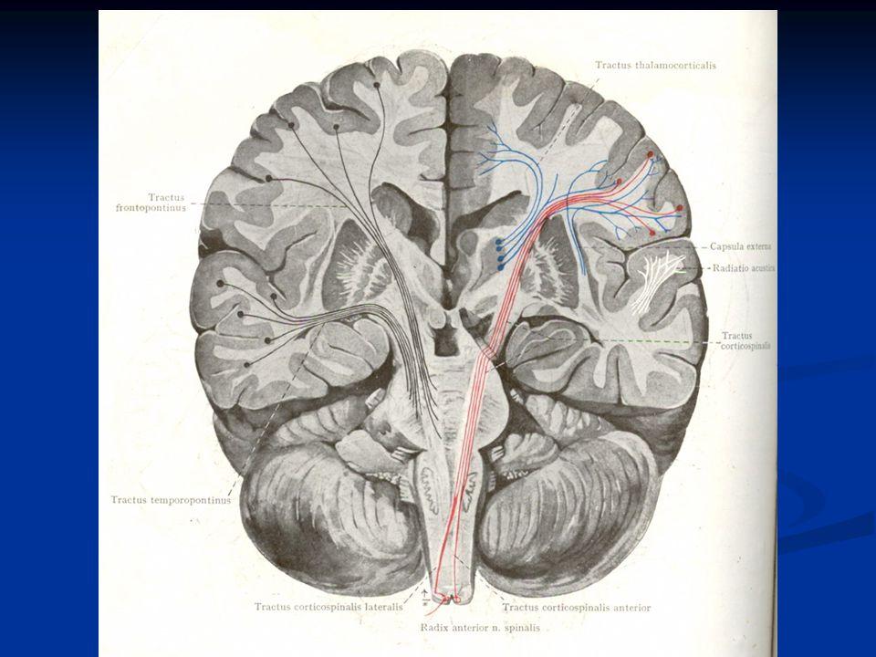 Serat-serat Reticulospinalis berasal dari : 1.