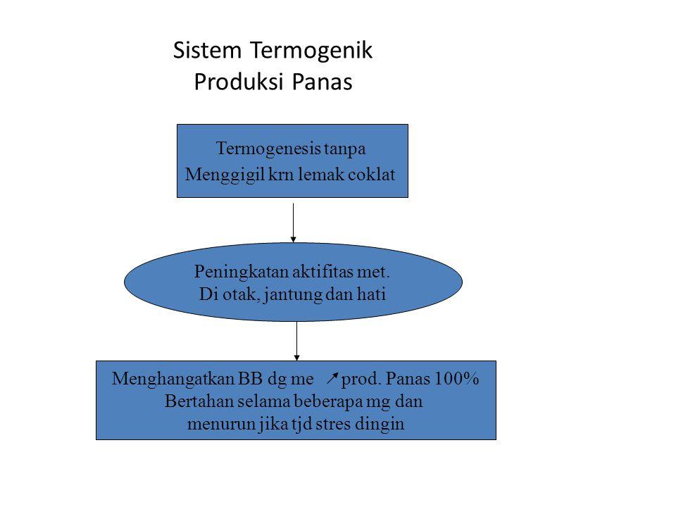 Termogenesis tanpa Menggigil krn lemak coklat Sistem Termogenik Produksi Panas Peningkatan aktifitas met. Di otak, jantung dan hati Menghangatkan BB d