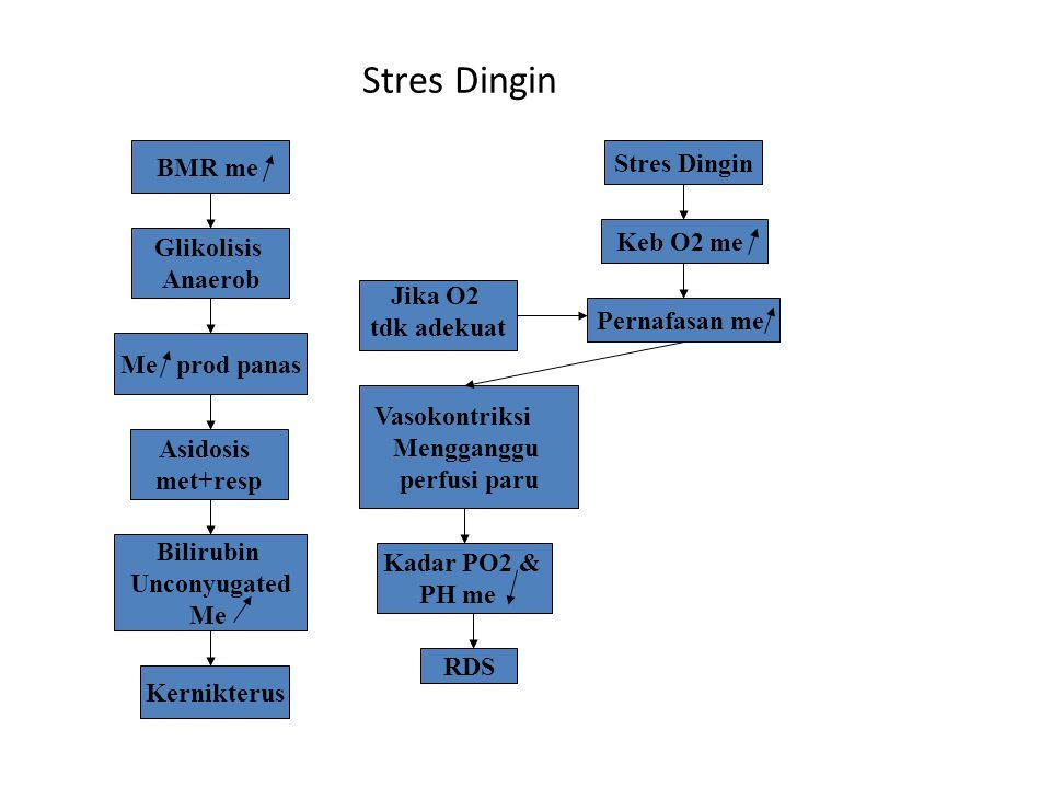 Stres Dingin Keb O2 me Pernafasan me BMR me Glikolisis Anaerob Me prod panas Asidosis met+resp Bilirubin Unconyugated Me Jika O2 tdk adekuat Vasokontr