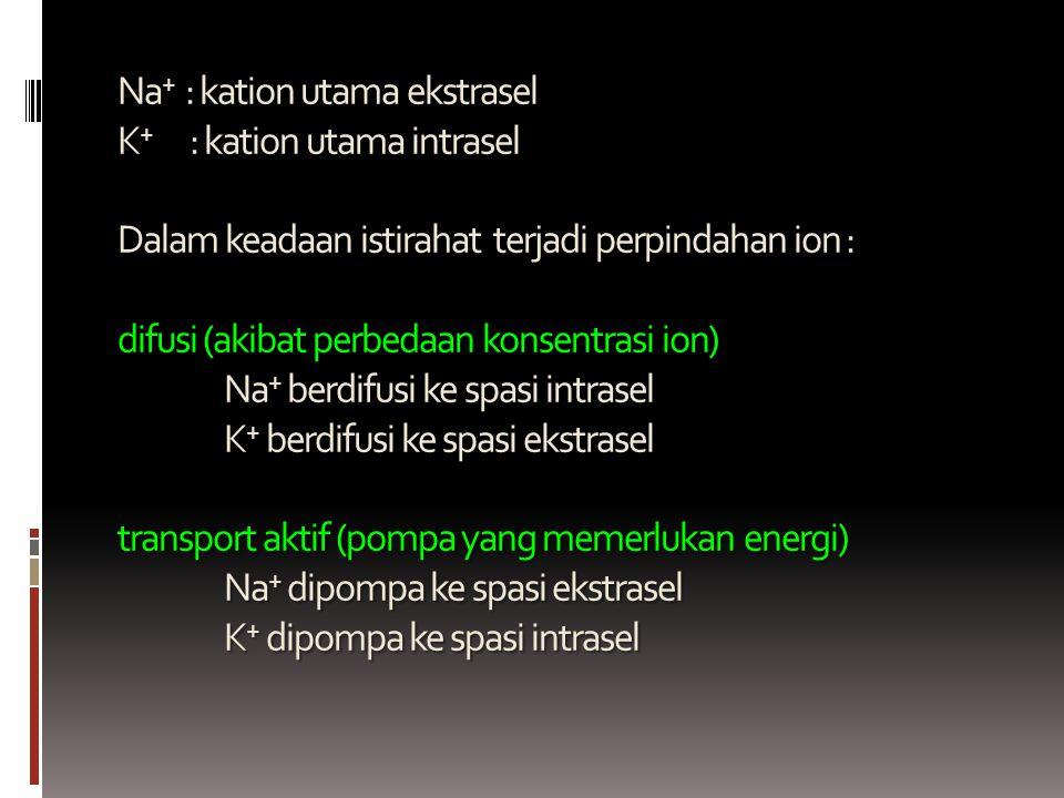 Na + : kation utama ekstrasel K + : kation utama intrasel Dalam keadaan istirahat terjadi perpindahan ion : difusi (akibat perbedaan konsentrasi ion)