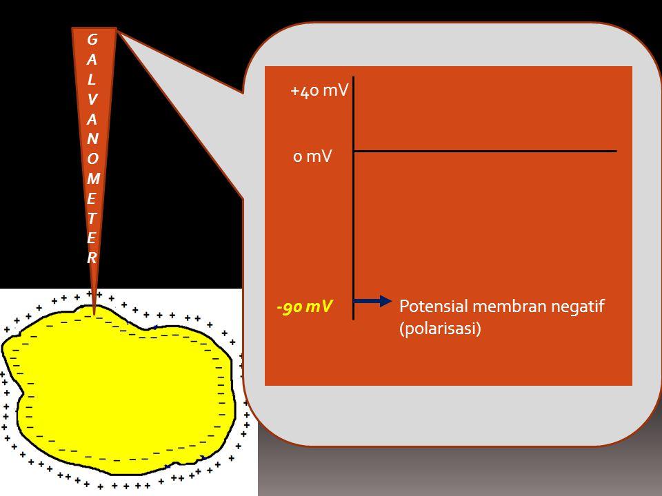 Potensial membran negatif (polarisasi) -90 mV 0 mV +40 mV GALVANOMETERGALVANOMETER