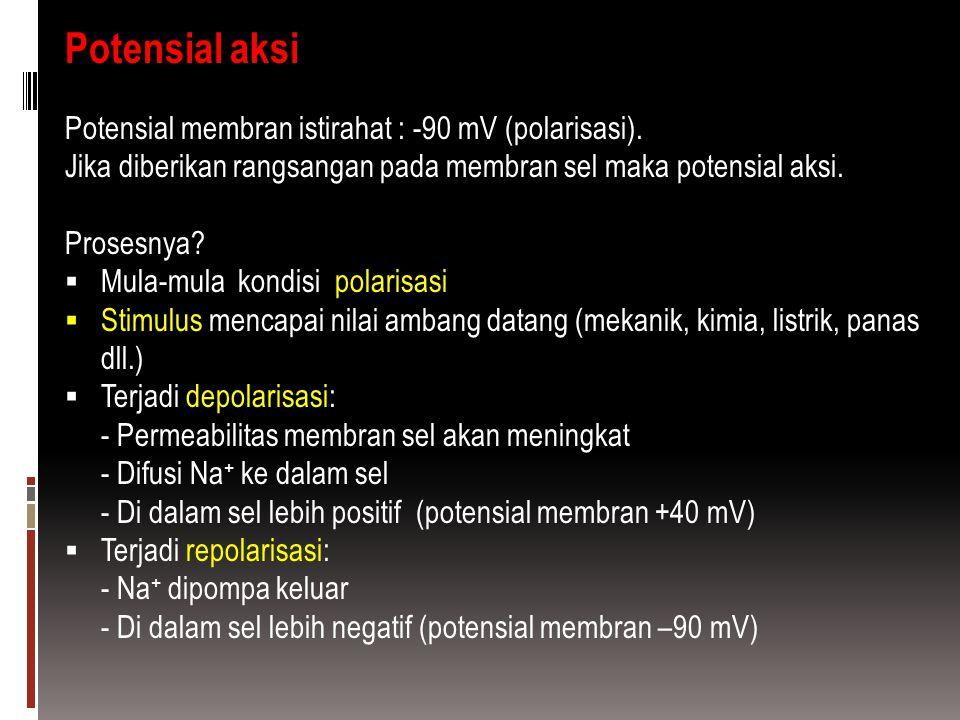 Potensial aksi Potensial membran istirahat : -90 mV (polarisasi). Jika diberikan rangsangan pada membran sel maka potensial aksi. Prosesnya?  Mula-mu