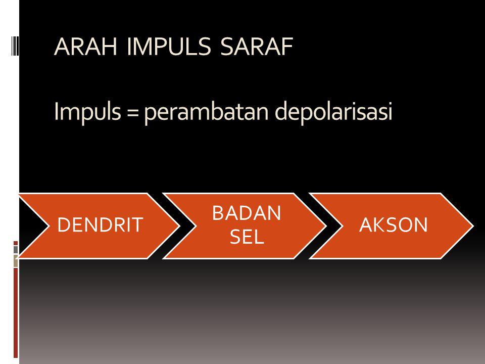 ARAH IMPULS SARAF Impuls = perambatan depolarisasi DENDRIT BADAN SEL AKSON
