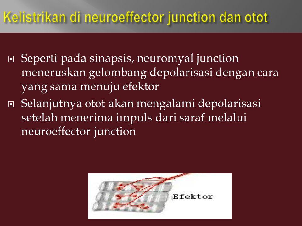  Seperti pada sinapsis, neuromyal junction meneruskan gelombang depolarisasi dengan cara yang sama menuju efektor  Selanjutnya otot akan mengalami d