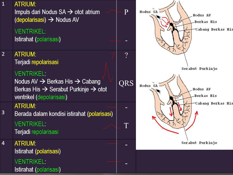 1 ATRIUM: Impuls dari Nodus SA  otot atrium (depolarisasi)  Nodus AV VENTRIKEL: Istirahat (polarisasi) P-P- 2 ATRIUM: Terjadi repolarisasi VENTRIKEL