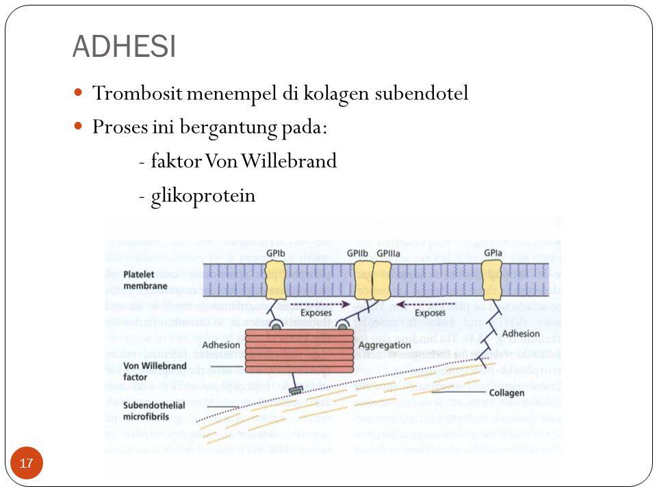 ADHESI  Trombosit menempel di kolagen subendotel  Proses ini bergantung pada: - faktor Von Willebrand - glikoprotein 17
