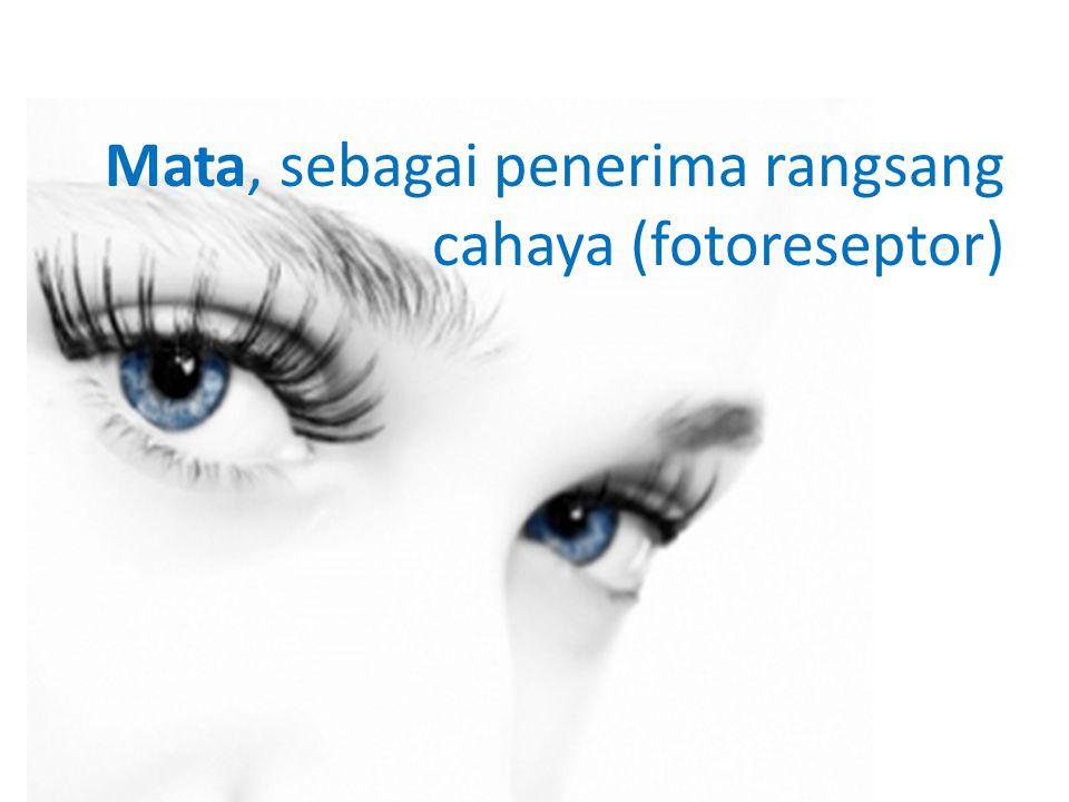 • Konjungtiva Adalah membran tipis pelindung (lapisan jaringan) pada mata.