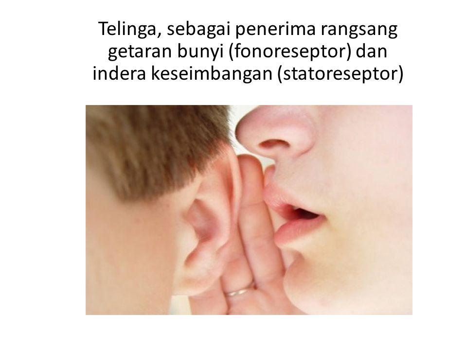 Hidung, sebagai penerima rangsang bau berupa gas (kemoreseptor )