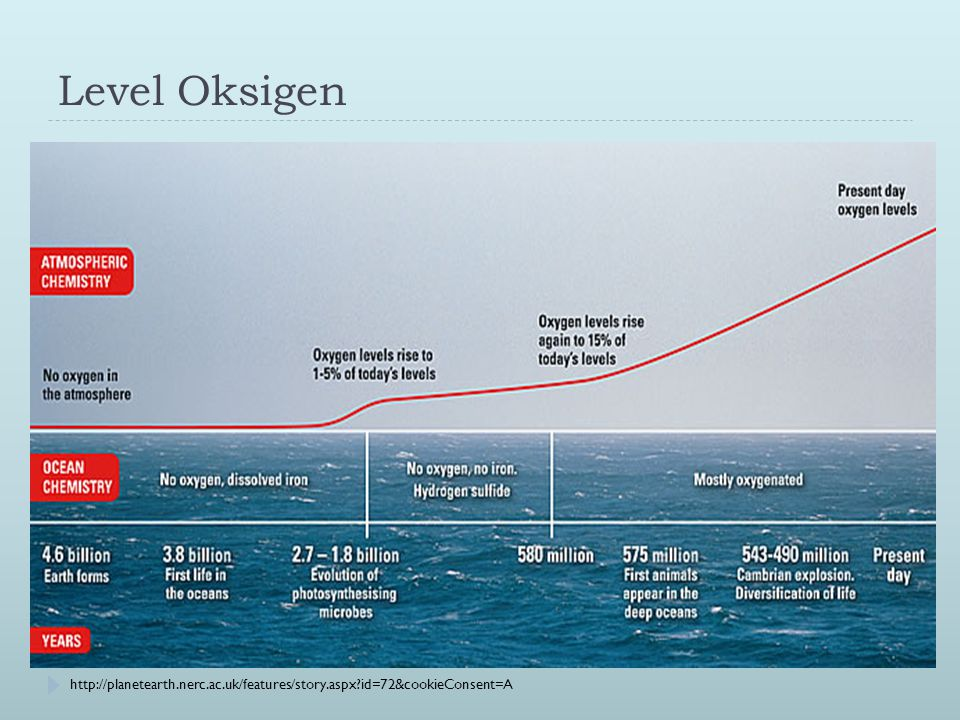 http://my.opera.com/nielsol/blog/2008/05/05/oxygen-in-seawater-and-global-warming