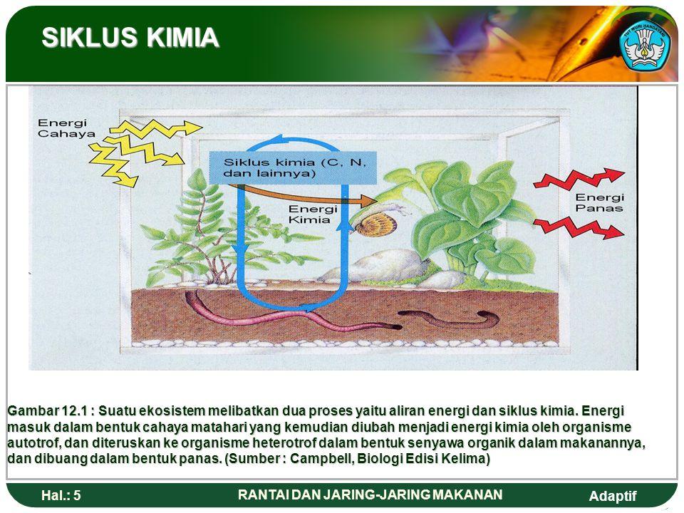 Adaptif Hal.: 6 RANTAI DAN JARING-JARING MAKANAN PRODUSEN Produsen memanfaatkan energi matahari untuk menghasilkan makanan melalui fotosintesis.