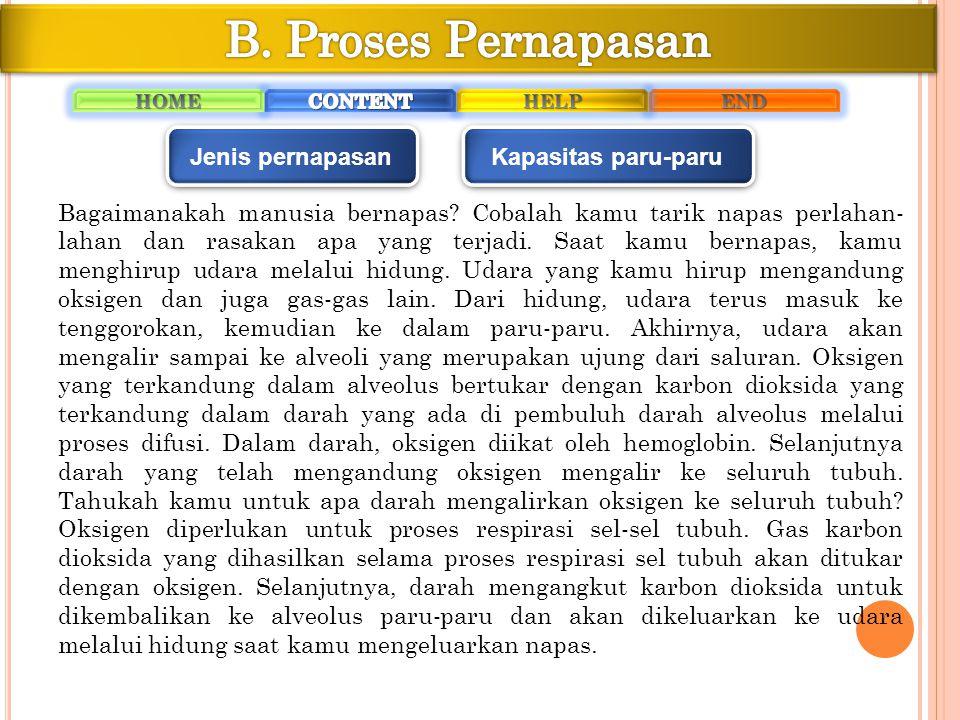 Proses pernapasan meliputi dua proses, yaitu menarik napas atau inspirasi serta mengeluarkan napas atau ekspirasi.