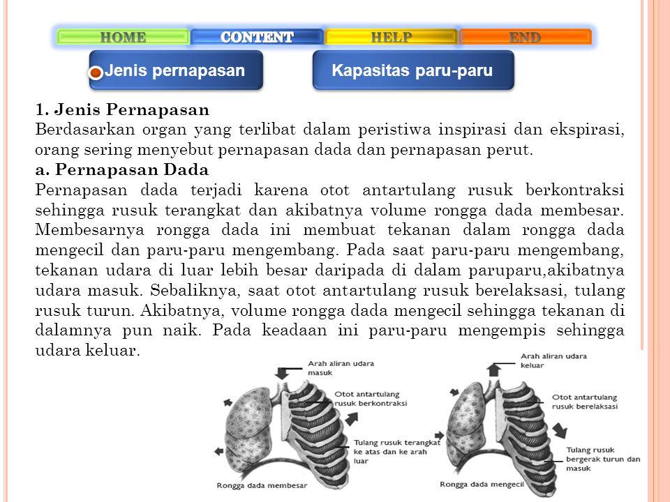 b.Pernapasan Perut Pernapasan ini terjadi karena gerakan diafragma.