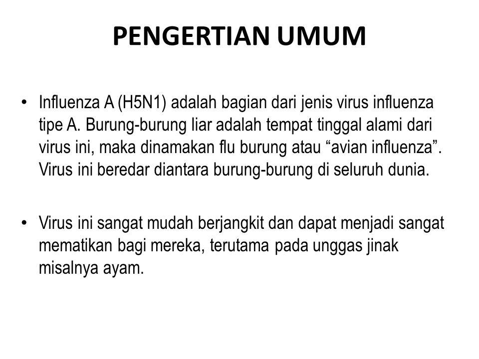 PENGERTIAN UMUM • Influenza A (H5N1) adalah bagian dari jenis virus influenza tipe A.