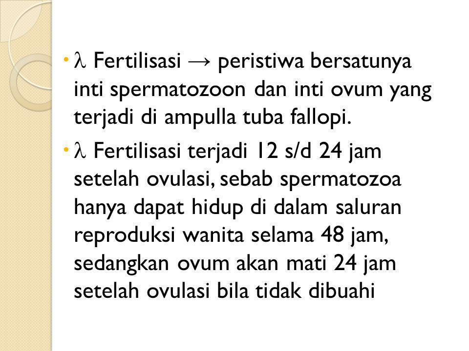   Fertilisasi → peristiwa bersatunya inti spermatozoon dan inti ovum yang terjadi di ampulla tuba fallopi.   Fertilisasi terjadi 12 s/d 24 jam set
