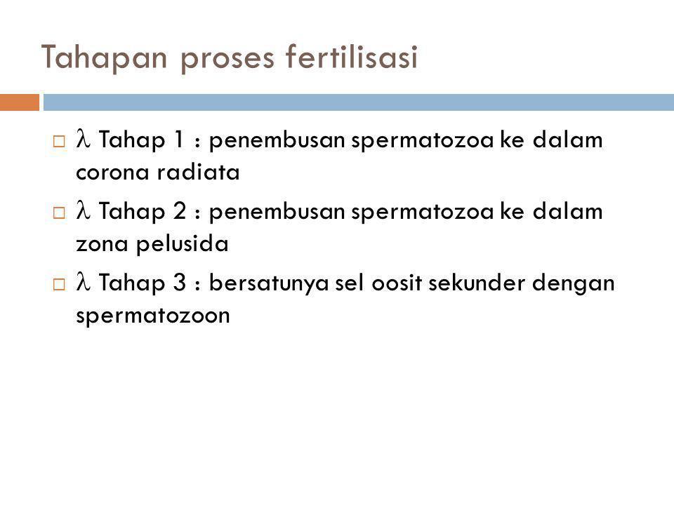 Tahapan proses fertilisasi   Tahap 1 : penembusan spermatozoa ke dalam corona radiata   Tahap 2 : penembusan spermatozoa ke dalam zona pelusida 