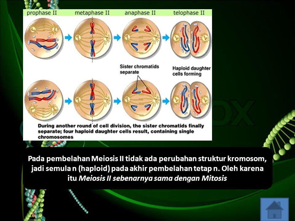 Pada pembelahan Meiosis II tidak ada perubahan struktur kromosom, jadi semula n (haploid) pada akhir pembelahan tetap n. Oleh karena itu Meiosis II se