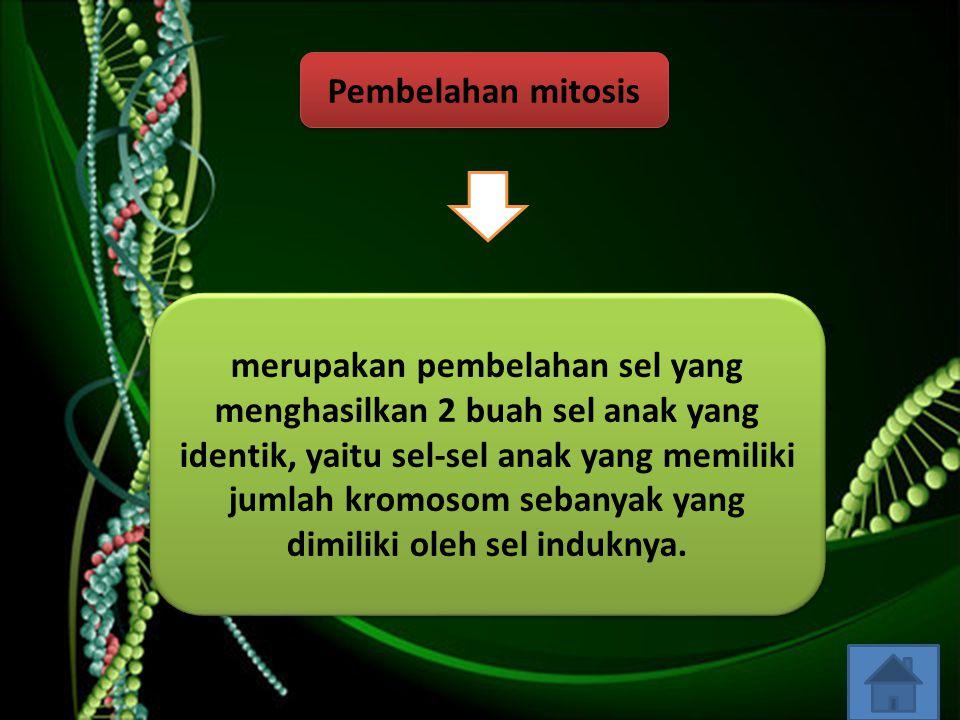 Pembelahan mitosis merupakan pembelahan sel yang menghasilkan 2 buah sel anak yang identik, yaitu sel-sel anak yang memiliki jumlah kromosom sebanyak