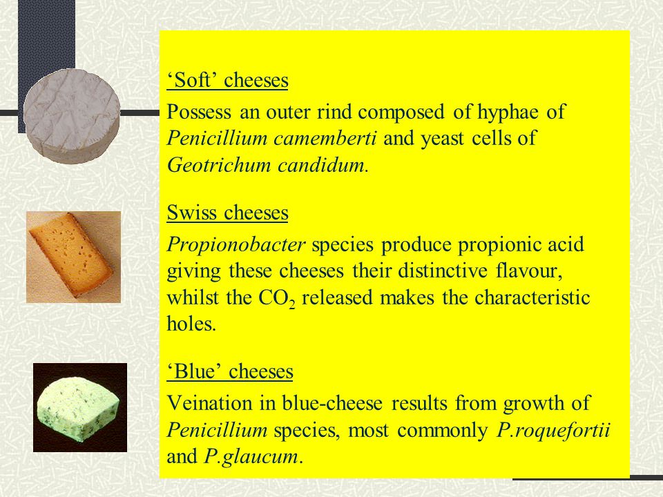 'Soft' cheeses Possess an outer rind composed of hyphae of Penicillium camemberti and yeast cells of Geotrichum candidum. Swiss cheeses Propionobacter