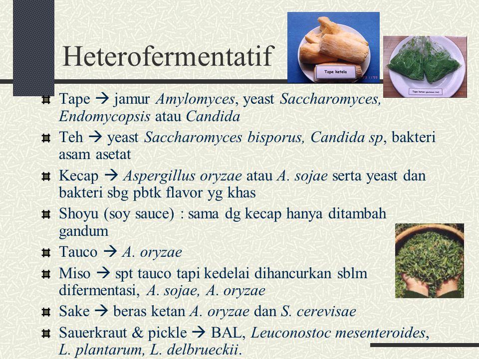 Heterofermentatif Tape  jamur Amylomyces, yeast Saccharomyces, Endomycopsis atau Candida Teh  yeast Saccharomyces bisporus, Candida sp, bakteri asam