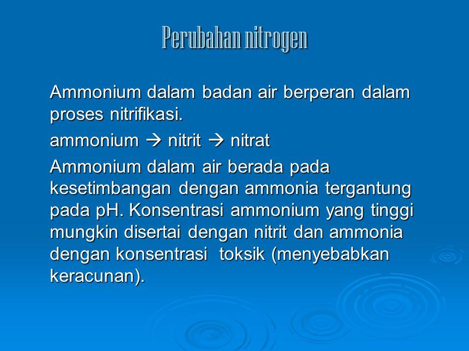 Perubahan nitrogen Ammonium dalam badan air berperan dalam proses nitrifikasi. ammonium  nitrit  nitrat Ammonium dalam air berada pada kesetimbangan
