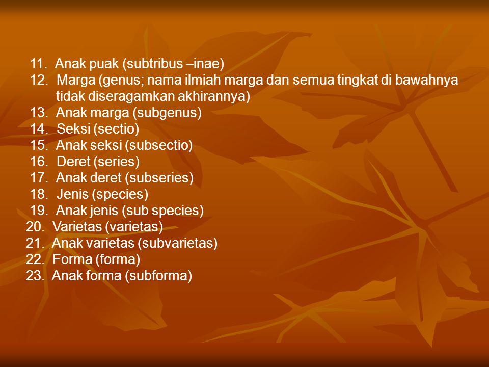 11. Anak puak (subtribus –inae) 12. Marga (genus; nama ilmiah marga dan semua tingkat di bawahnya tidak diseragamkan akhirannya) 13. Anak marga (subge