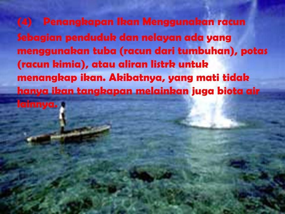 (4) Penangkapan Ikan Menggunakan racun Sebagian penduduk dan nelayan ada yang menggunakan tuba (racun dari tumbuhan), potas (racun kimia), atau aliran