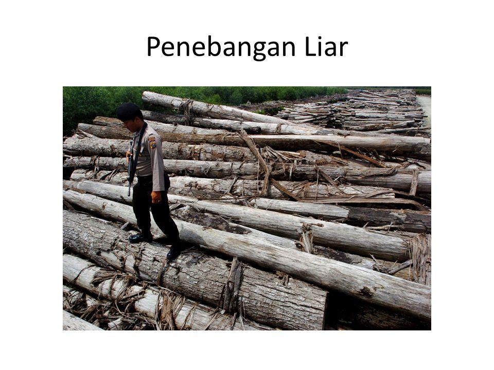 Penebangan Liar